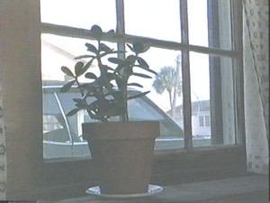 PlantbyWindowRubyinParadiseblog