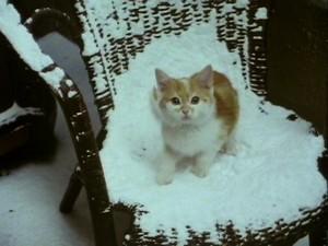 KittenGoneblog