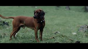 dog (1)
