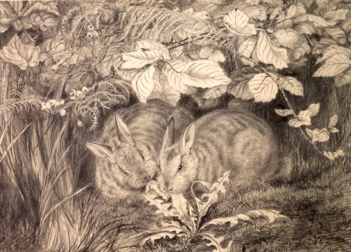 Rosa Brett - Study of Two Rabbits