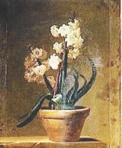 vallayercosterhyacinth