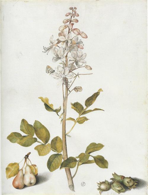 garzonibotanical