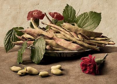 giovanna garzonibeans