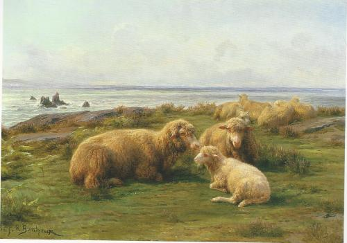 sheepbytheseabonheur