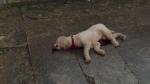 bleedingdog